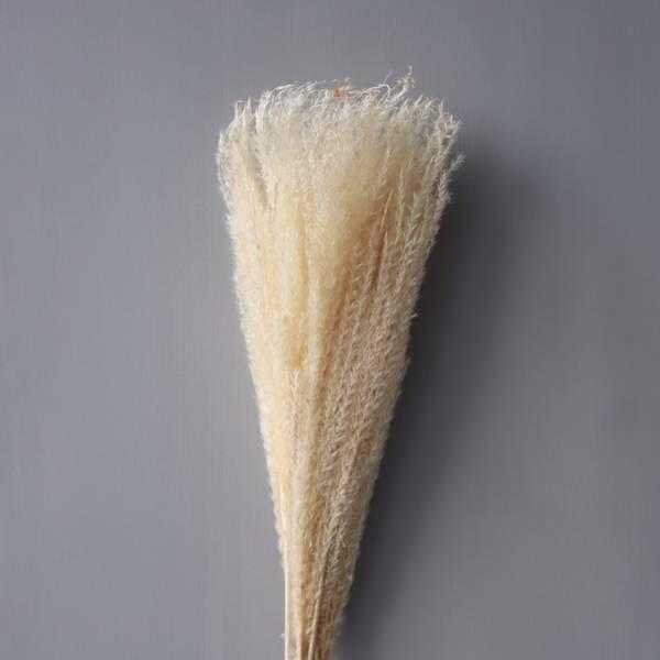 Bilde av Feather Pampas White